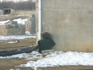 Mimi-Dude on the Cistern Spigot
