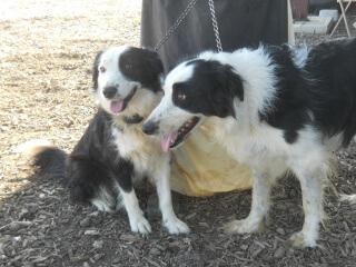 Brodey & Nessa, 2013