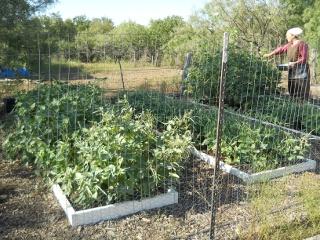Spring Garden 2012 Black-Eyed Peas