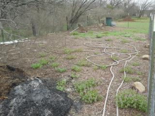 2015 Winter Weeds in Garden I West