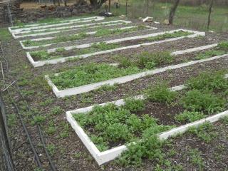2015 Winter Weeds in Garden I East