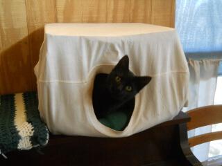 Leila in the Cat Box