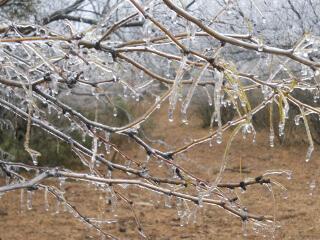 Ice Storm Ice on Trees