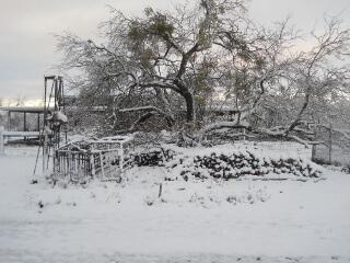 Firewood & Snow