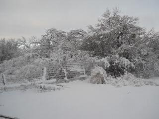 Garden & Snow