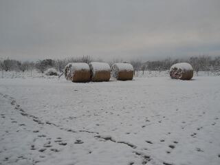 Hay Bales & Snow