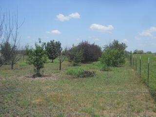 Orchard 2021