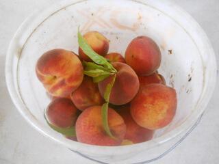 Picked Peaches 2021