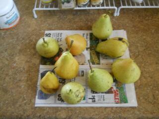 2017 Pears