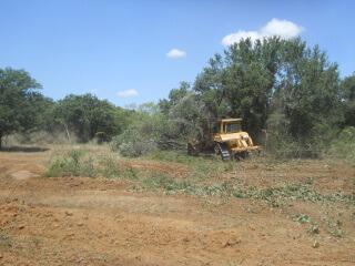 Bulldozer Felling More Trees