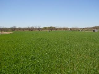 Wheat 2012
